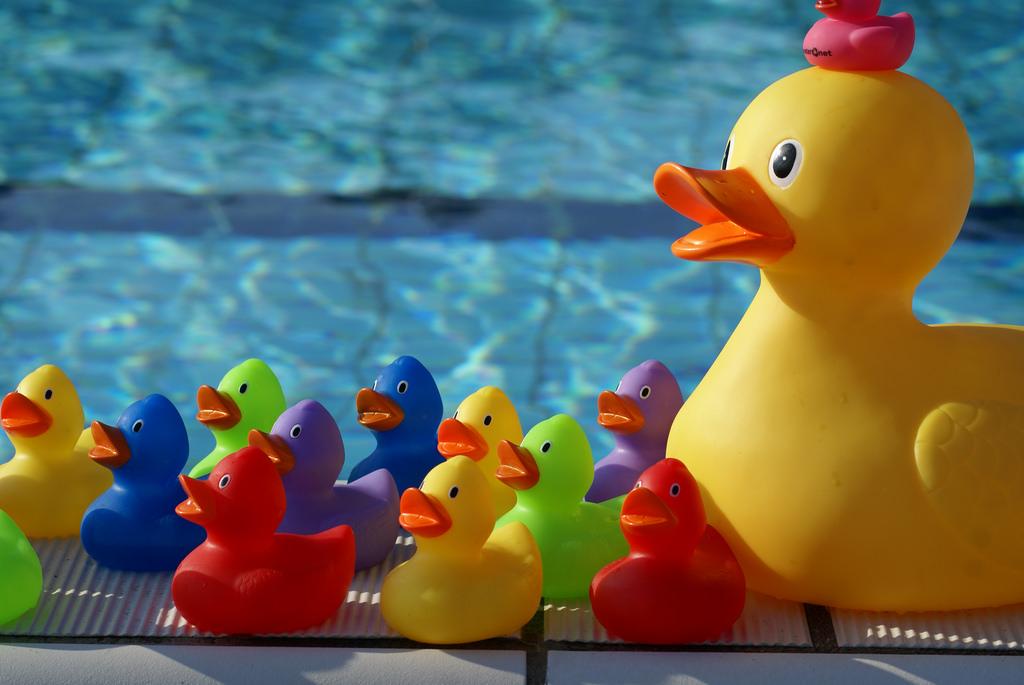 Hout beton schutting zwembad de wildert openingstijden